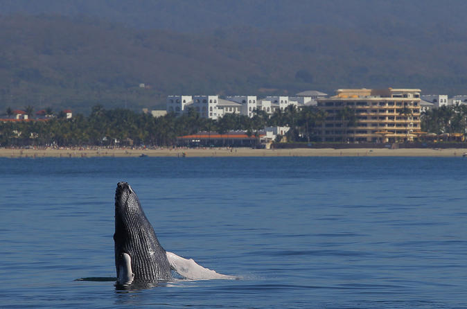 Whale Watching Cruise in Puerto Vallarta