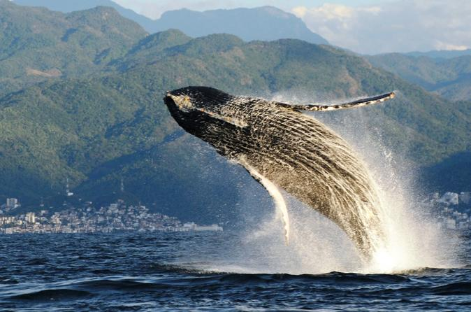 Whale Watching Eco-Tour
